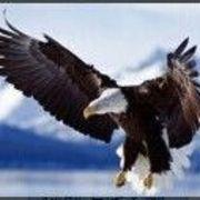 B丶F〆永不停飞的鹰