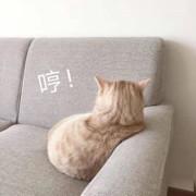 陈橙QAQ
