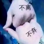🎀小祖宗🎀